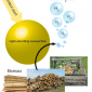 Investigating the market need for the production of hydrogen from biomass